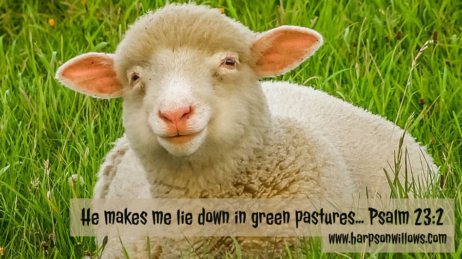 Harps On Willows Psalms 23 2 He Makes Me Lie Down In Green Pastures